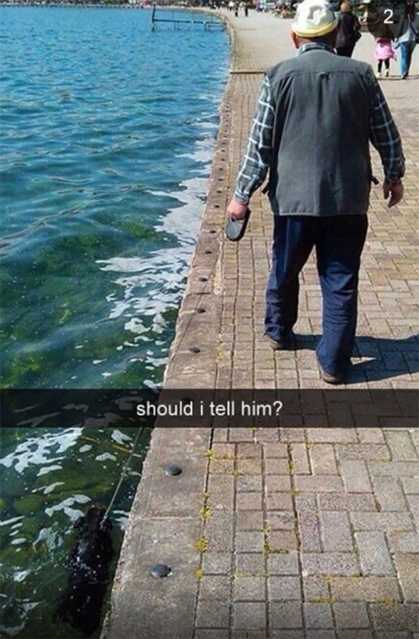 snapchat fails dog in water