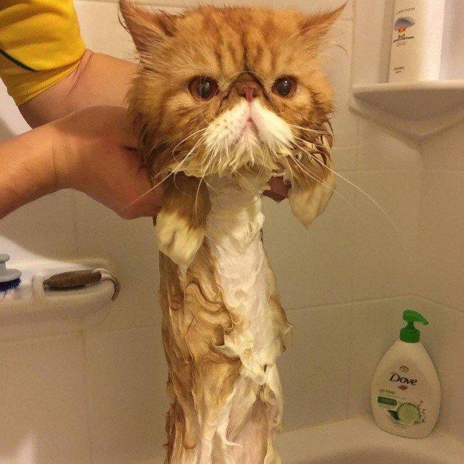 squished animals cat bath