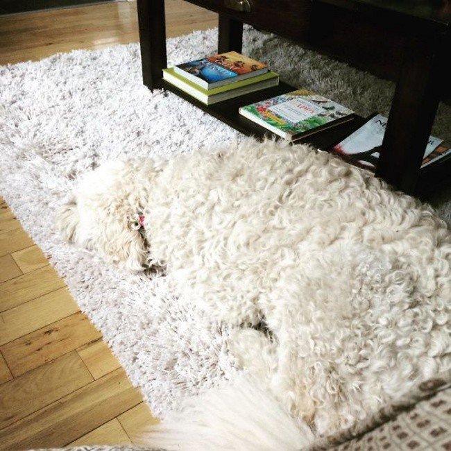 squished animals dog blending rug