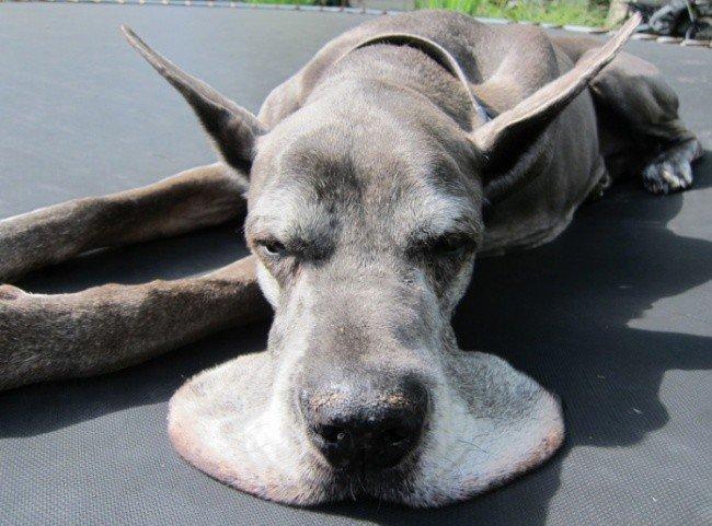 squished animals dog splat face