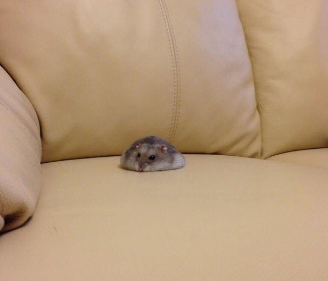 squished animals hamster sofa