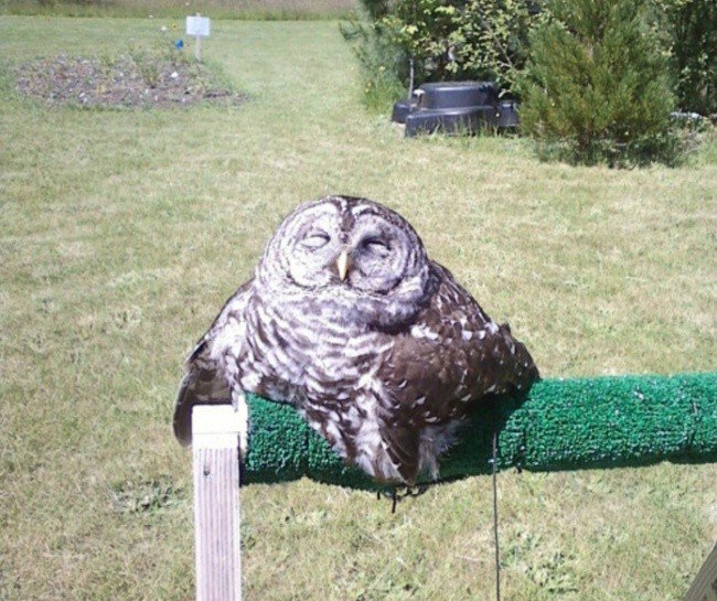 squished animals owl outdoors