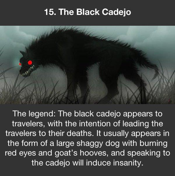 urban legends the black cadejo