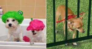 useful pet tips make life easier
