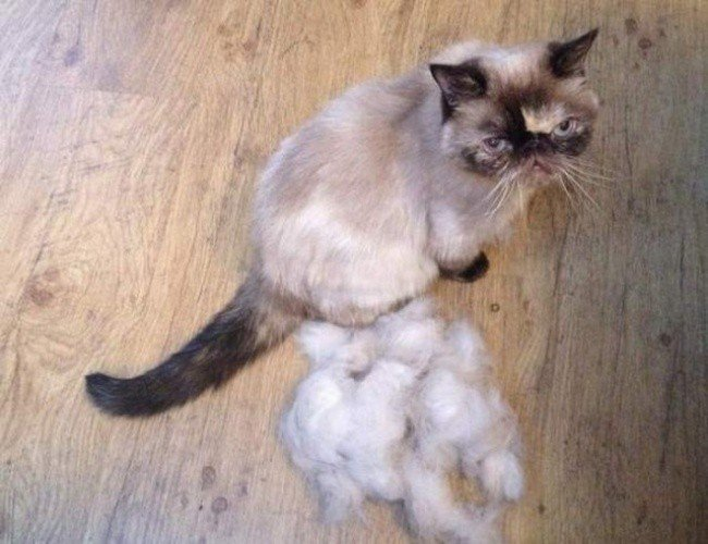 useful pet tips cat fur balls