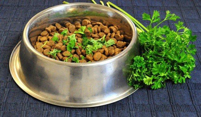 useful pet tips dog food parsley