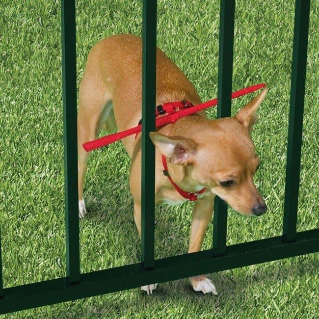 useful pet tips dog rod collar