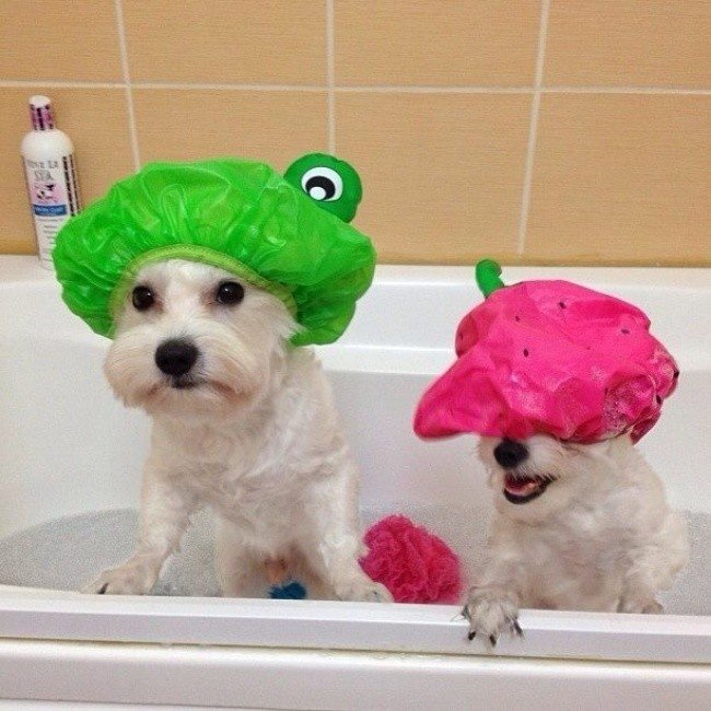 useful pet tips dogs shower caps