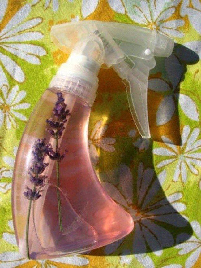 useful pet tips lavender spray bottle