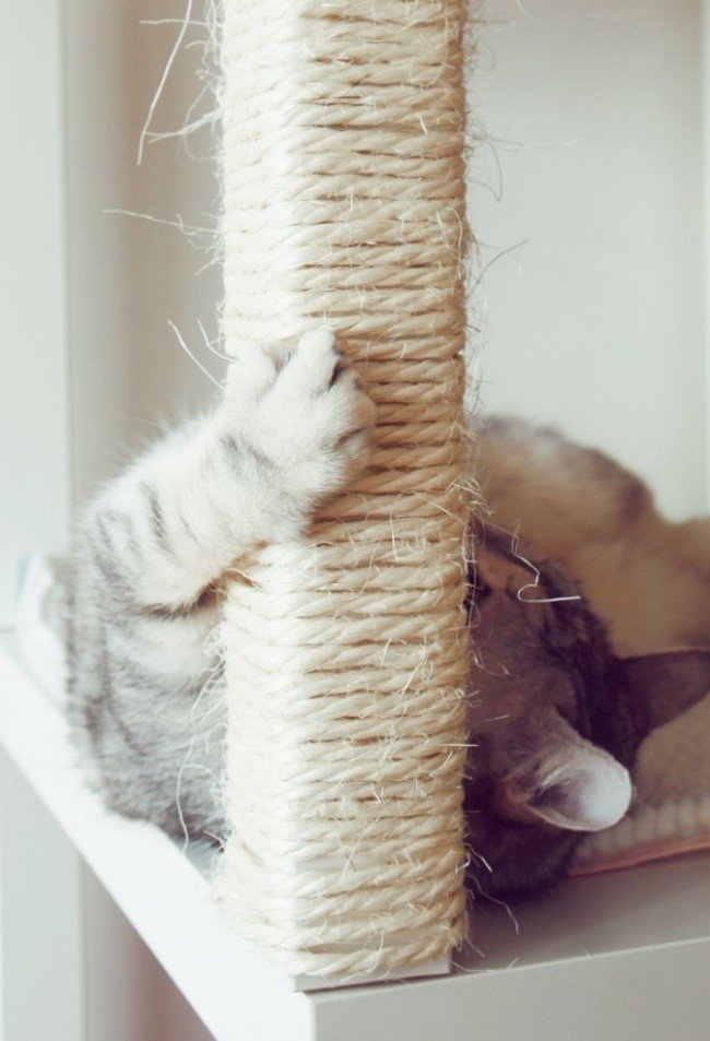 useful pet tips scratching post