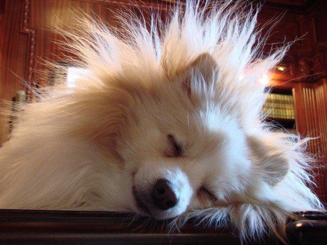 useful pet tips static dog