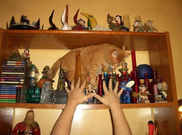 cat about to knock stuff off of shelf