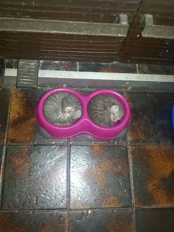 cats curled in bowls