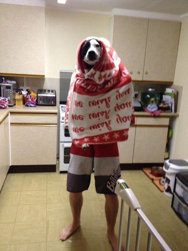 dog human hybrid joke