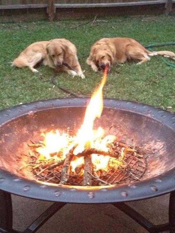 dog looks like breathing fire