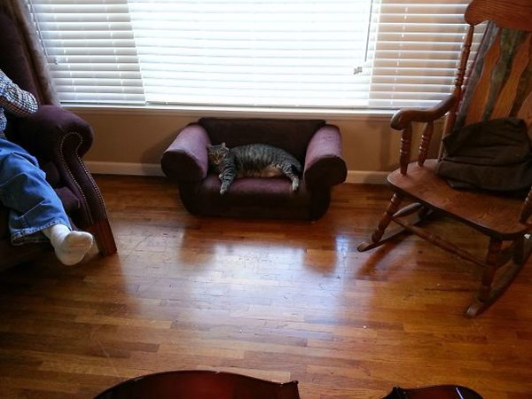 drunk purchases cat couch