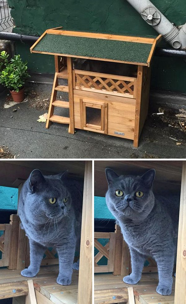 drunk purchases cat house