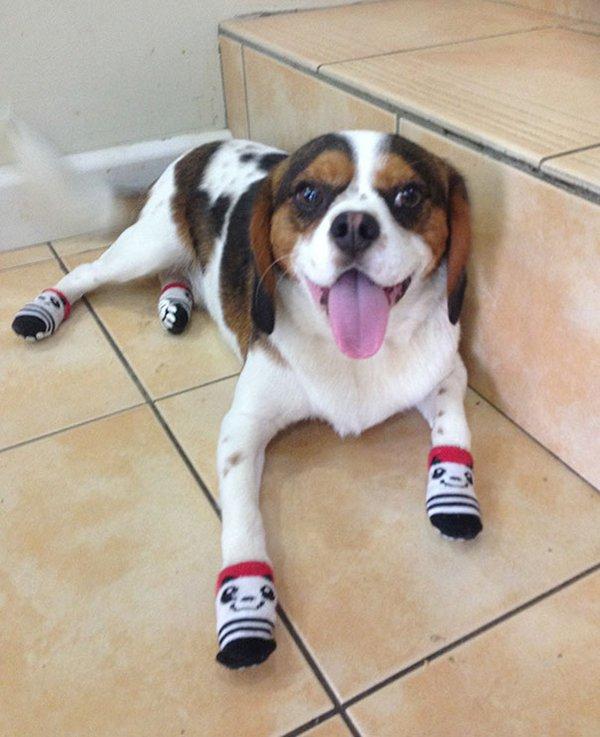 drunk purchases dog socks