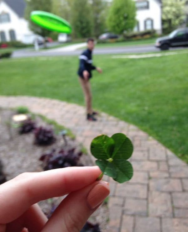 four leaf clover frisbee flying at face