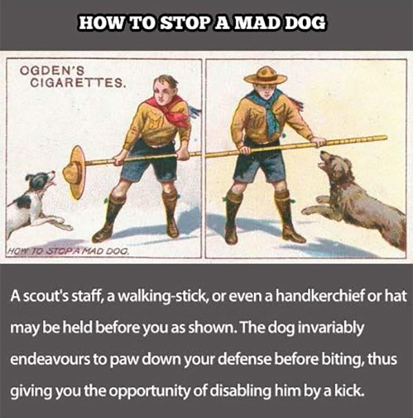 how to stop a mad dog