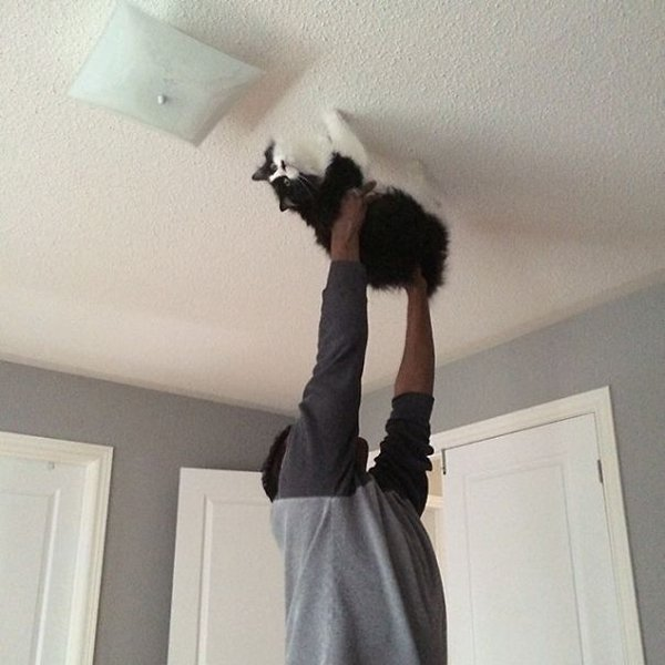 husband doing spider cat
