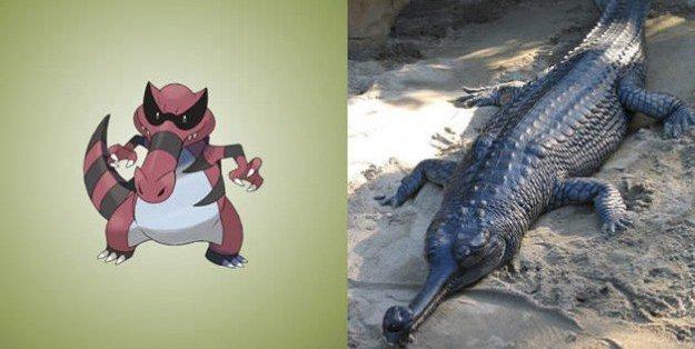 krookodile gharial
