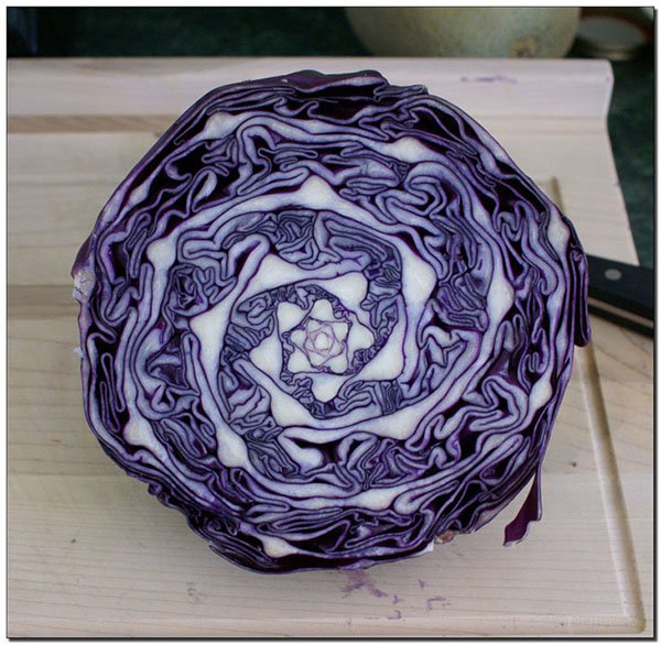 natural geometry of a cabbage