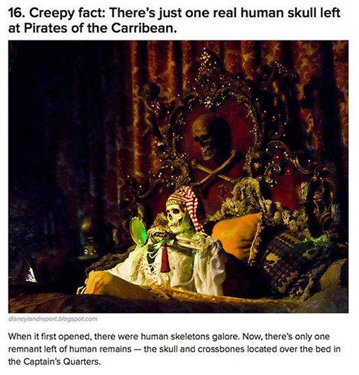 real human skull disneyland