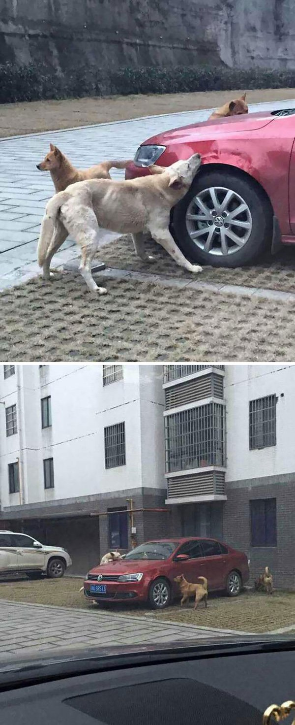 revenge stories stray dogs attack car