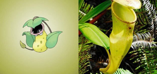 victreebel pitcher plant