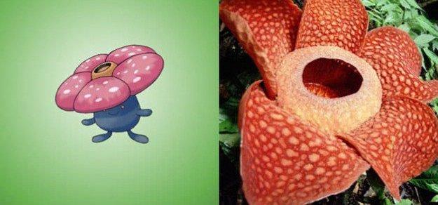vileplume rafflesia arnoldii