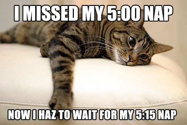 Cat Problems i missed my nap