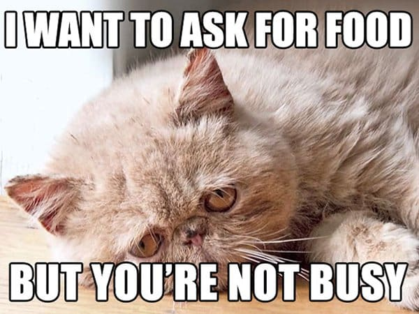 Cat Problems i want to ask for food