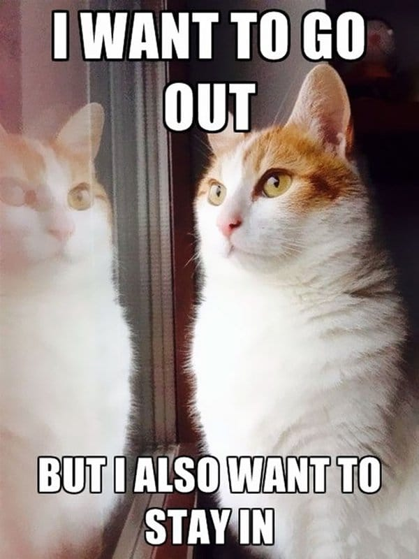 Cat Problems i want to go out but i also want to stay in