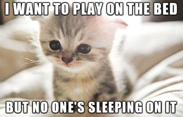 Cat Problems i want to play on the bed