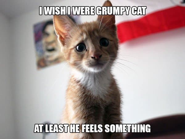 Cat Problems i wish i were a grumpy cat