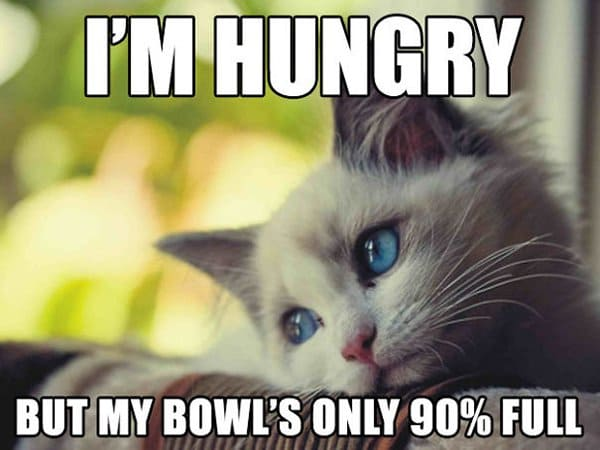Cat Problems im hungry but