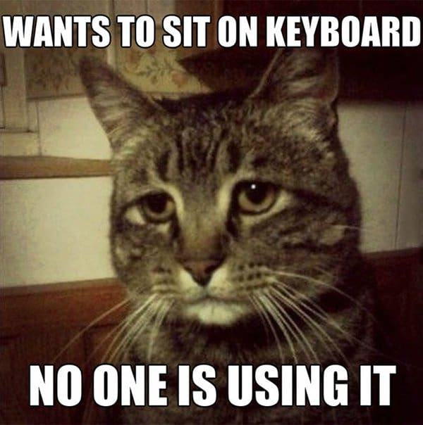 Cat Problems no one is using keyboard