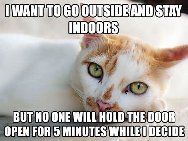 Cat Problems no one will hold the door open