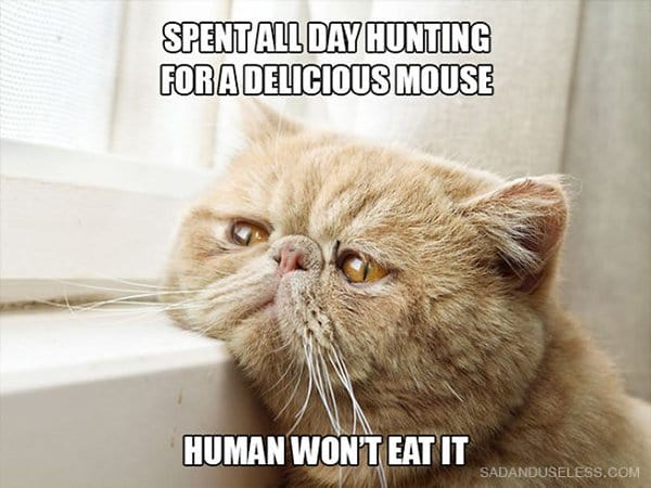 Cat Problems spent all day hunting mouse