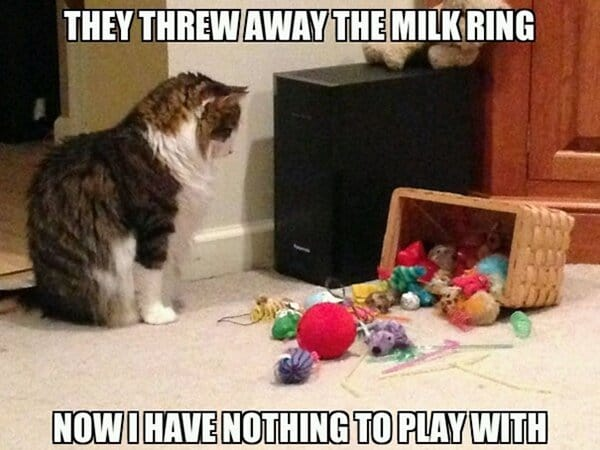 Cat Problems they threw away the milk ring