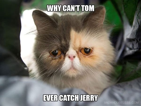 Cat Problems why cant tom ever catch jerry
