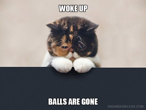 Cat Problems woke up balls are gone