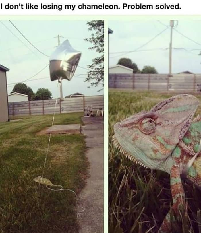 Clever People chameleon with balloon