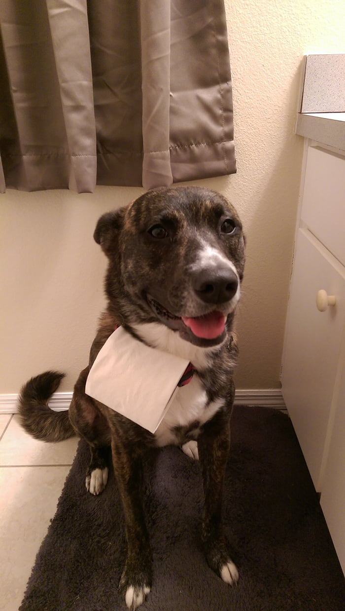 Clever People dog toilet paper delivery