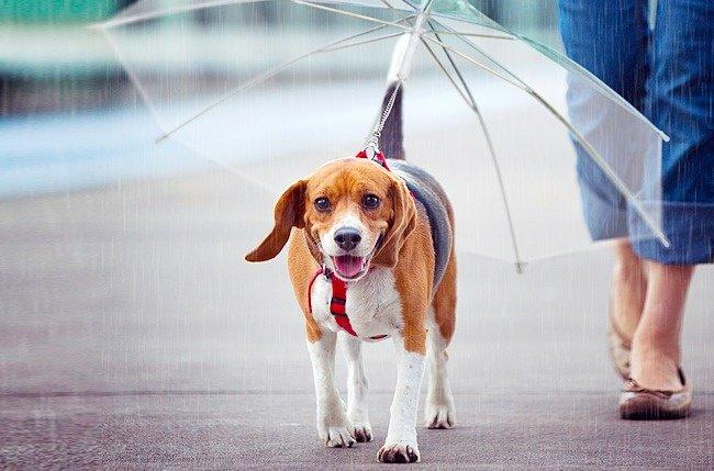 Cool Stuff dog umbrella