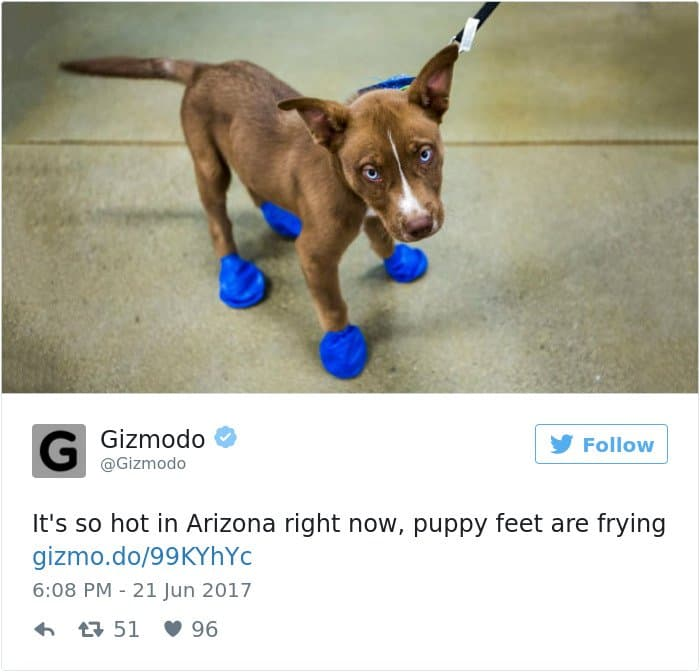 High Temperatures Arizona Pictures Things Melting puppy feet
