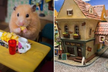 Miniature Town For Hamsters
