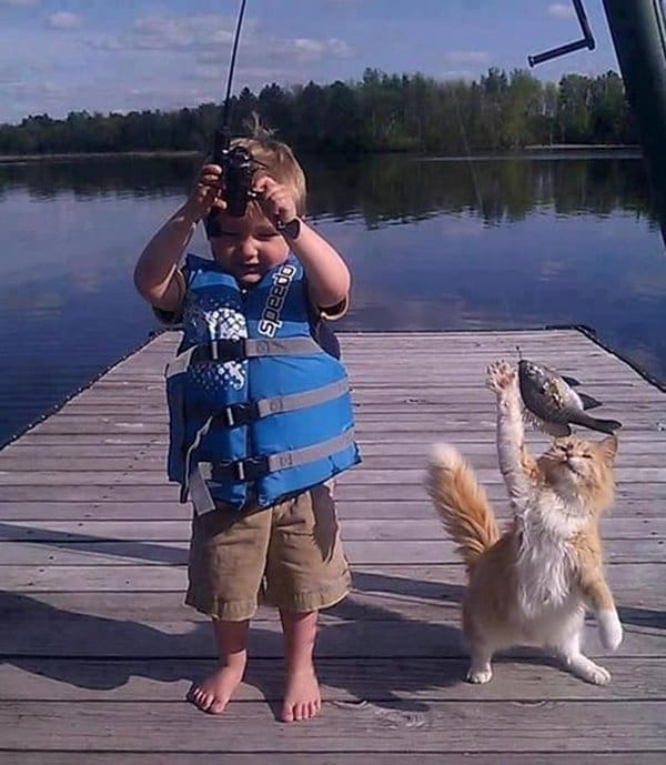 Pets Caught Red Handed cat stealing kids fish
