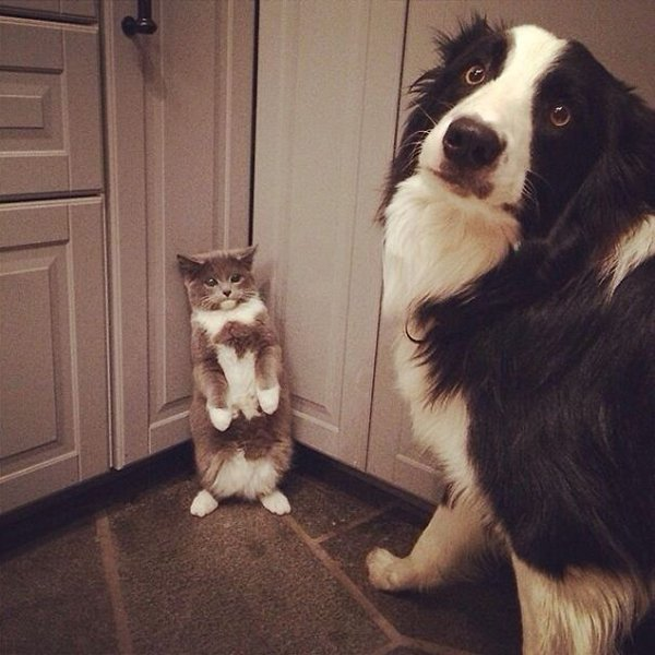 Pets Caught Red Handed dog cornering cat